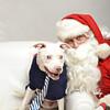 Fetch Santa13-8127