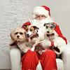 Fetch Santa13-8054