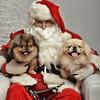 Fetch Santa13-7997