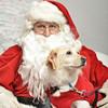 Fetch Santa13-8186