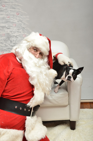 Fetch Santa13-8147