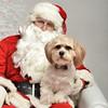 Fetch Santa13-8015