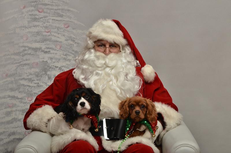 Fetch Santa13-8237