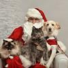 Fetch Santa13-8184