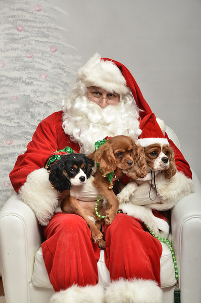 Fetch Santa13-8226