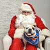 Fetch Santa13-8165