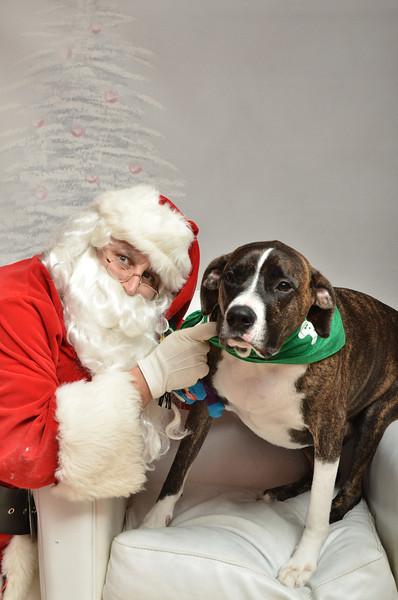 Fetch Santa13-8294