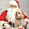 Fetch Santa13-8007