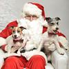 Fetch Santa13-8043