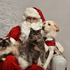 Fetch Santa13-8180