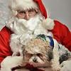 Fetch Santa13-7970