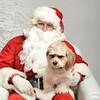 Fetch Santa13-8009