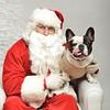 Fetch Santa13-8070