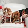 Fetch Santa13-8253