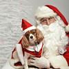 Fetch Santa13-8248