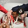 Fetch Santa13-8254