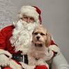 Fetch Santa13-8011
