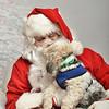 Fetch Santa13-7967