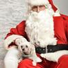 Fetch Santa13-8115