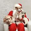 Fetch Santa13-8058