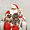 Fetch Santa13-8175