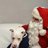 Fetch Santa13-8137