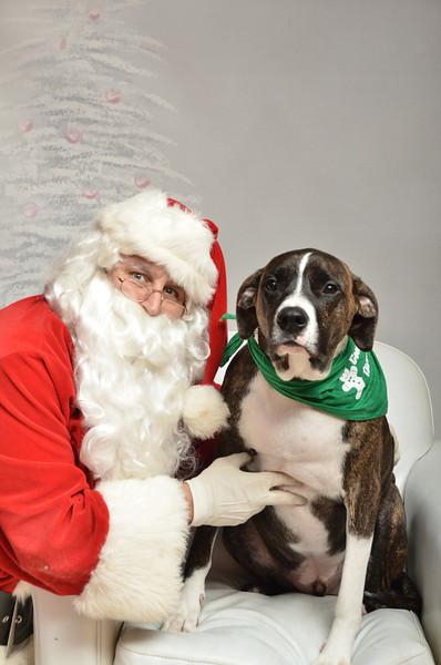 Fetch Santa13-8297