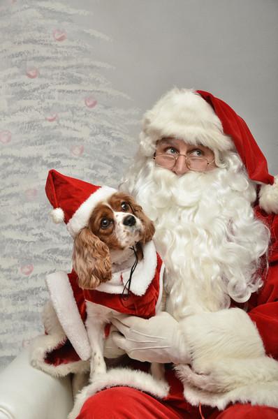 Fetch Santa13-8245