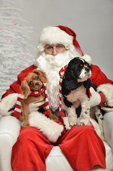 Fetch Santa13-8082