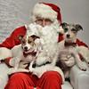 Fetch Santa13-8039