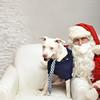 Fetch Santa13-8125