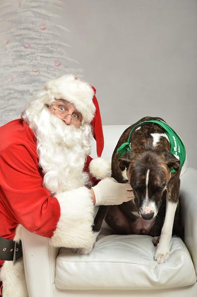 Fetch Santa13-8298
