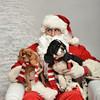 Fetch Santa13-8081