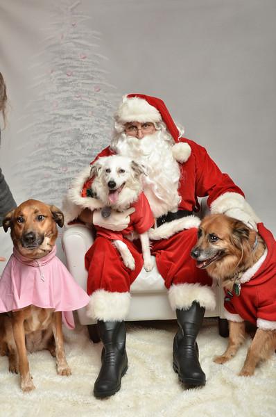 Fetch Santa13-8276