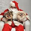 Fetch Santa13-7992