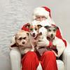 Fetch Santa13-8057