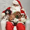 Fetch Santa13-8221
