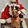 Fetch Santa13-7964