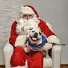 Fetch Santa13-8164