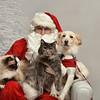Fetch Santa13-8181