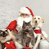 Fetch Santa13-8182