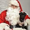 Fetch Santa13-8271