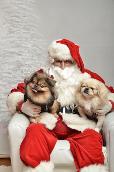 Fetch Santa13-7995