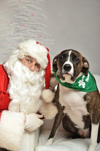 Fetch Santa13-8295