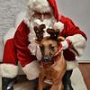 Fetch Santa13-7966