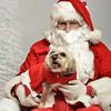 Fetch Santa13-7954