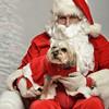 Fetch Santa13-7953