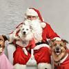 Fetch Santa13-8281