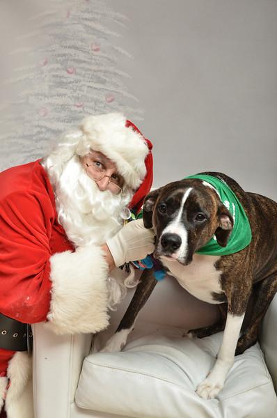 Fetch Santa13-8292