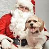 Fetch Santa13-8023